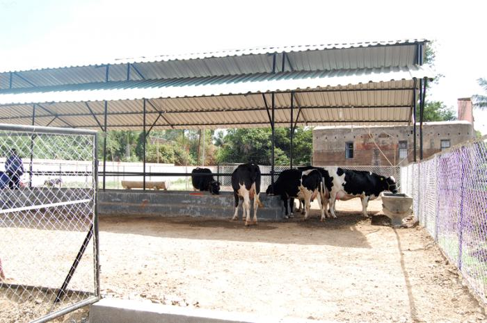 MDF Modern Dairy Farm VIKRAM PAWASE