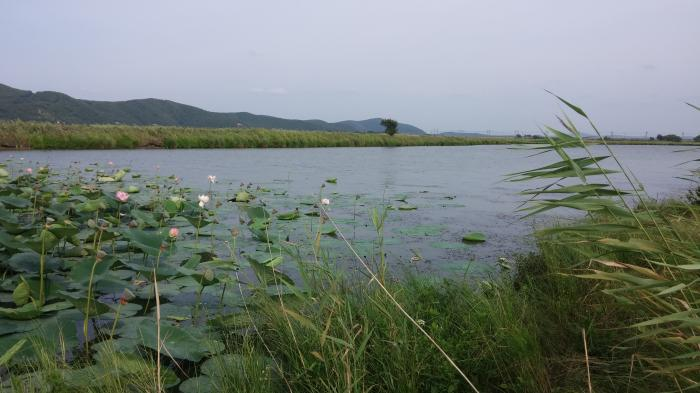 озеро кувшинка  рыбалка