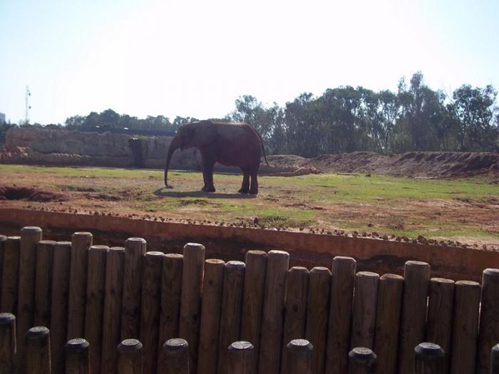 rabat zoo odense struds English
