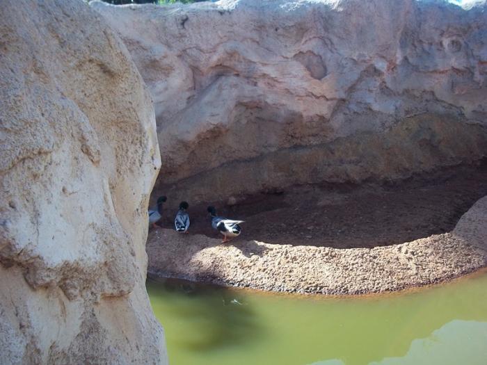 næstved zoo park Givskud Zoo rabat