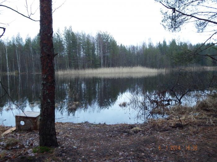 прогноз клева рыбы в сосновом бору ленинградской области