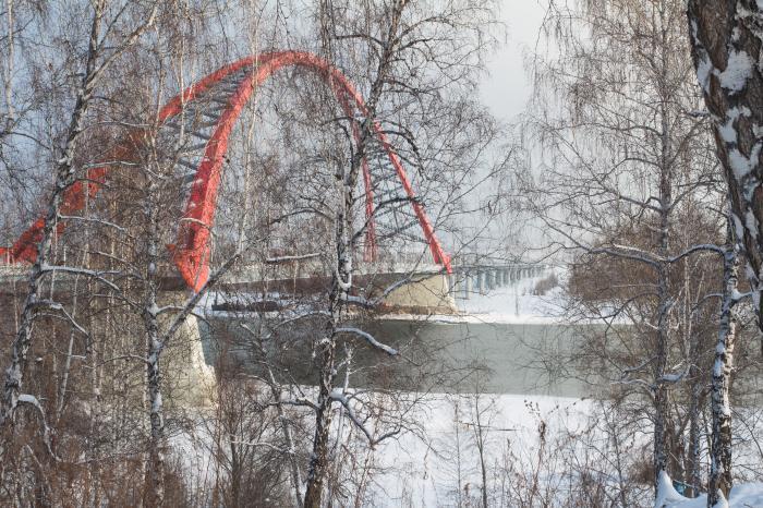 бугринская роща новосибирска фото