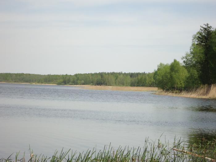 рыбалка барановичи общалка