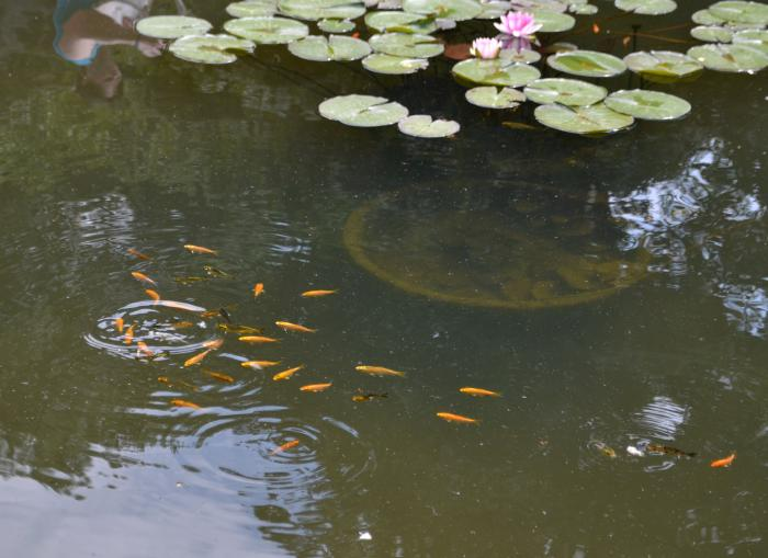уманский рыболов