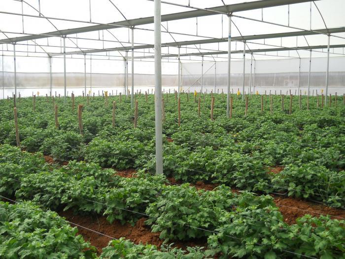 poly green house-2015-16-krishnagiri district - hosur