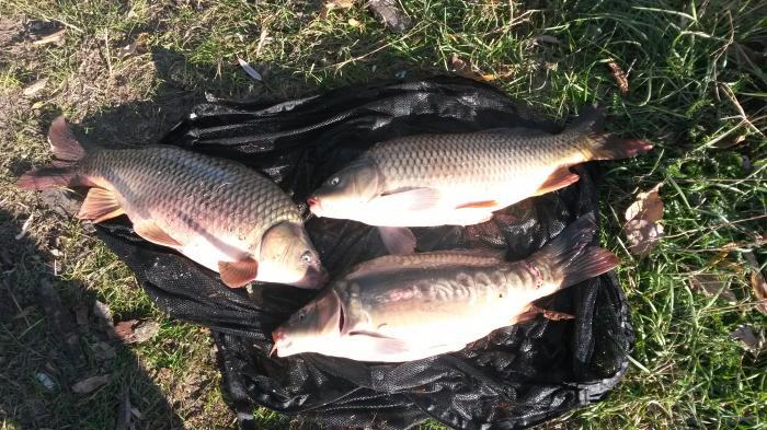рыбалка в молдове на озерах