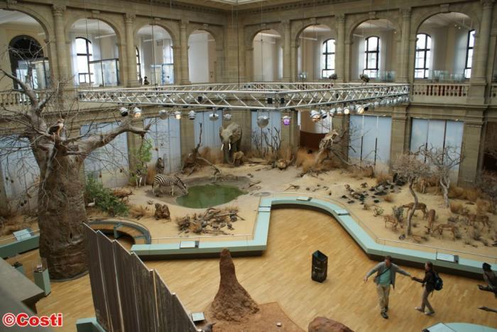 museum könig bonn