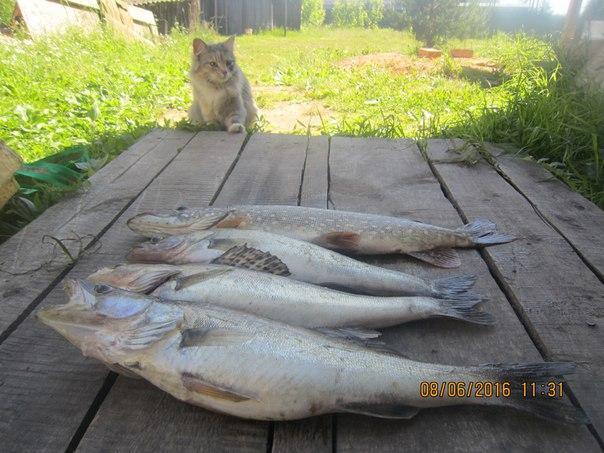 прогноз клева рыбалки в весьегонске