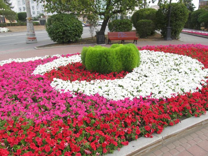 Городские клумбы цветы фото