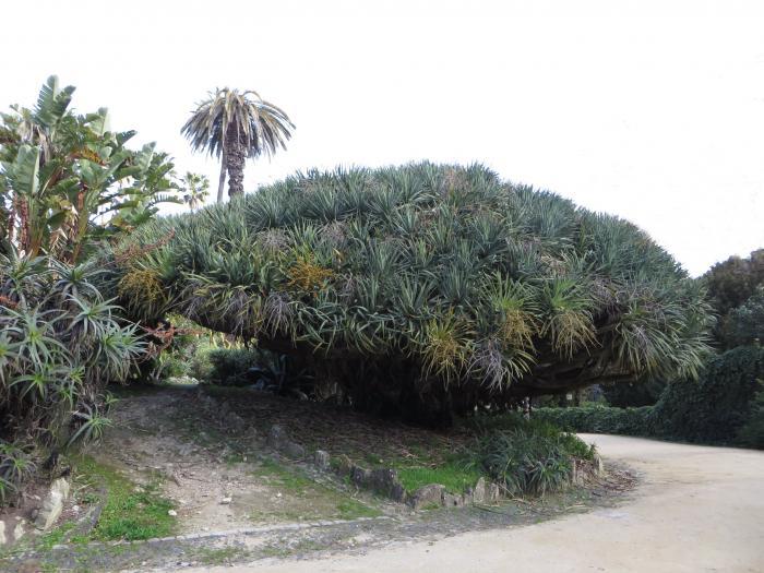 Ботанический сад Ажуда - Лиссабон | 525x700