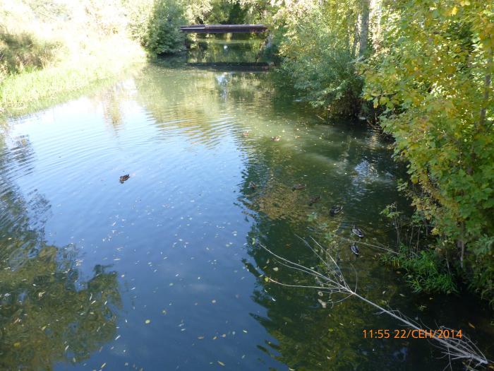 плетенка павловка река