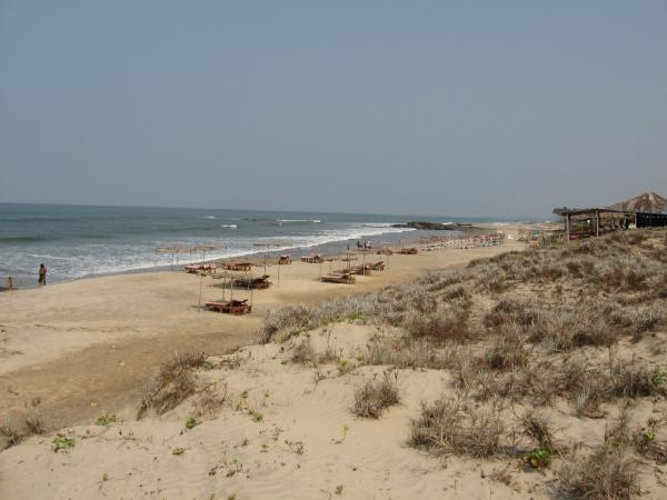 Morjim Beach, Goa: famous Turles on beach