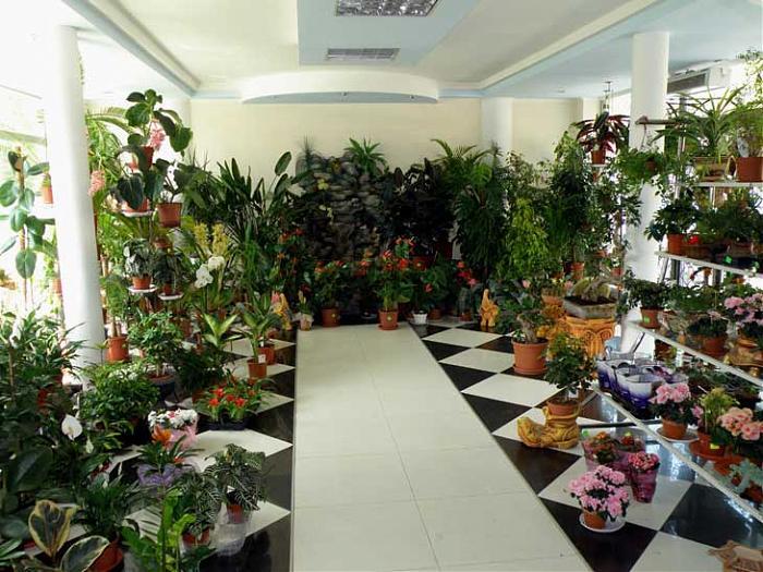 Оптом челябинск, цветы интернет магазин харьков дешевле нет города