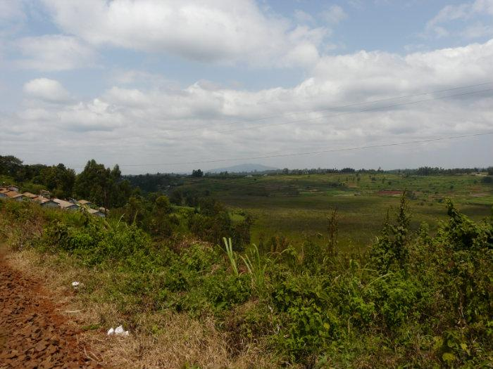 Image result for ondiri swamp