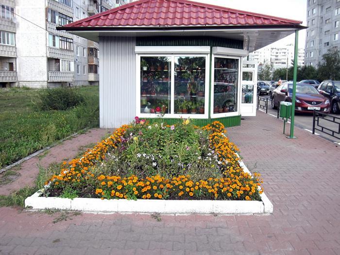 Дешевые цветы в орехово зуево, цветы герань пеларгонию