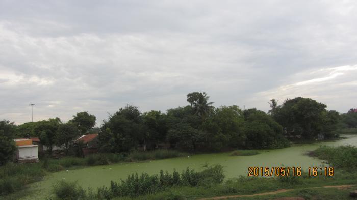 Image result for செல்லூர் கண்மாய்: